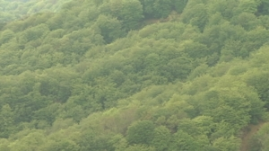 BASKEGUR : Cluster de la madera