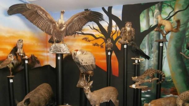 Natur zientzien tailerrak Hontza Museoan